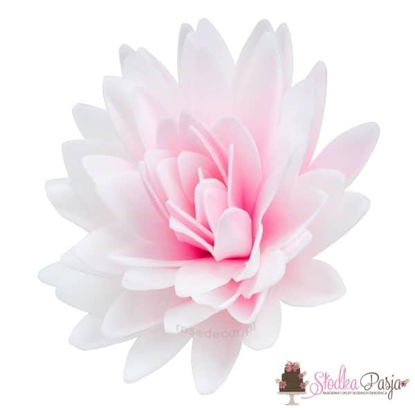 dekoracja na tort Aster peoniowy cieniowany róż
