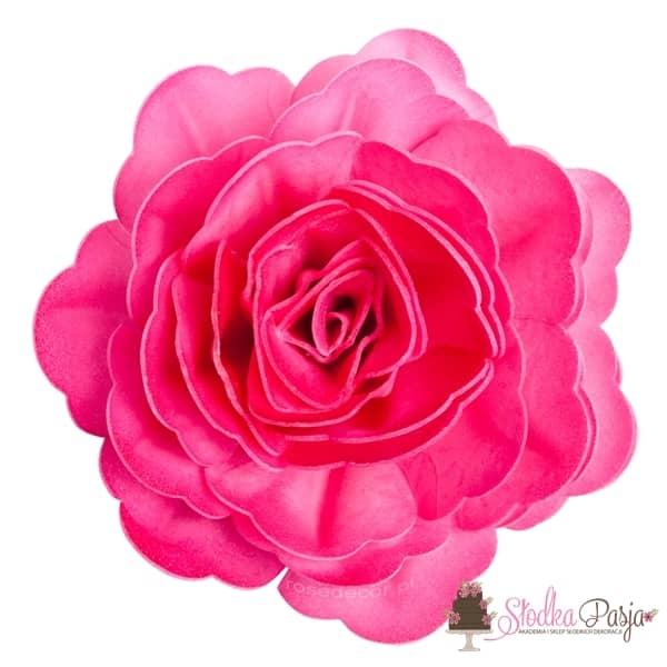 Dekoracja na tort kwiat róża chińska cieniowana fuksja waflowa - 1 szt