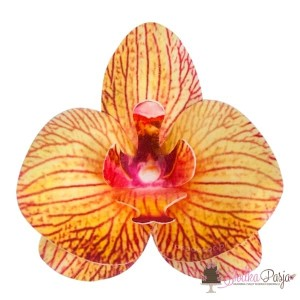 Dekoracja na tort kwiat storczyk herbaciany waflowa - 10 szt