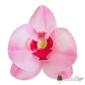 Dekoracja na tort kwiat storczyk różowy waflowa - 10 szt
